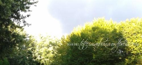 o zi in parc Romania Brasov