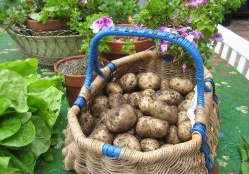 652x450_138822-7-soiuri-de-cartofi-pe-care-trebuie-sa-le-cultivi-pentru-gustul-lor-deosebit