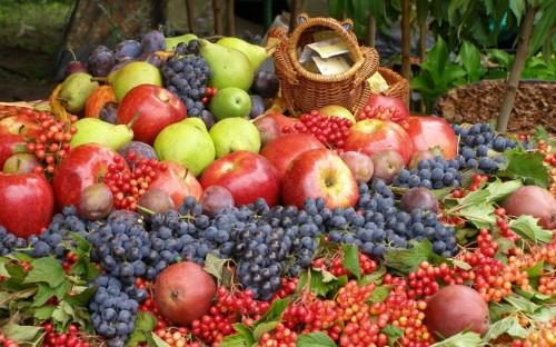 fructe-toamen-1024x640